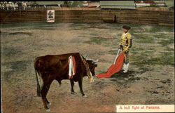 A Bull Fight At Panama