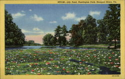 Lily Pond, Huntington Park