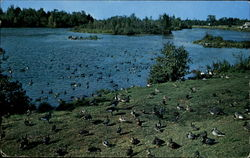 Alpena Wildfowl Sanctuary