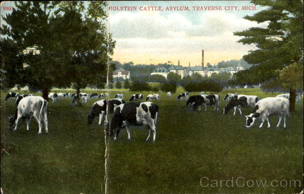 Holstein Cattle, Asylum Traverse City Michigan