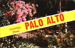 Greetings From Palo Alto