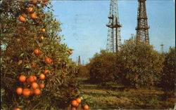 Oranges And Oil Wells
