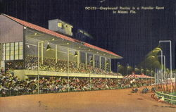 Greyhound Racing Is A Popular Sport In Miami