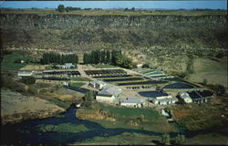 Snake River Trout Farm