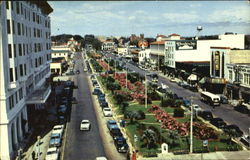 Pensacola's Lovely Parkway, North Palafax St