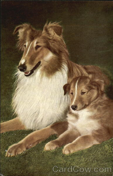 Collie With Puppy Dogs