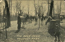 The Deer Farm, Prospect Park