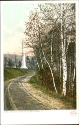 Birches At Morningside Postcard