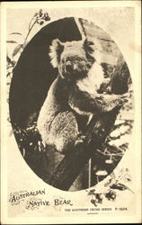 Australian Native Bear (Koala)