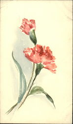Two pink carnations