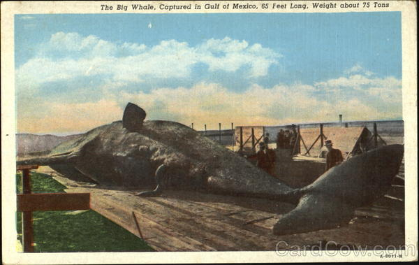 The Big Whale