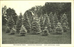 The Mission Trees, Northfield Seminary