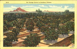 An Orange Grove In Southern Arizona