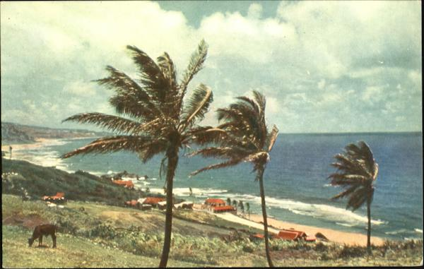 Bathsheba Coast Barbados Caribbean Islands
