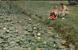 Tourists At Lily Pond Postcard