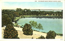 An Orange Grove Among Florida Lakes