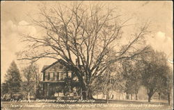 The Famous Rathbone Elm Near Marietta