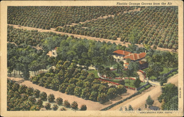 Florida Orange Groves From The Air Trees
