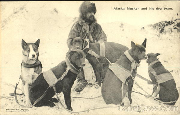 Alaska Musker And His Dog Team Hegg Dogs