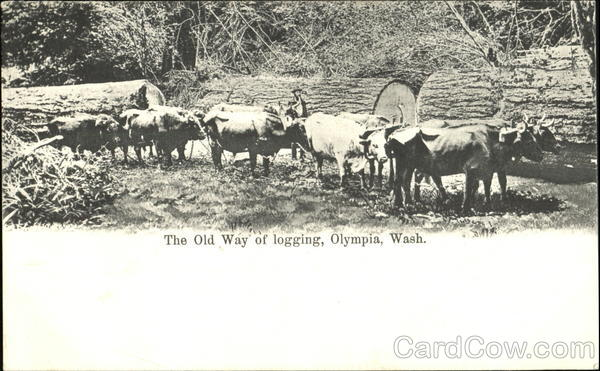 The Old Way Of Logging Olympia Washington