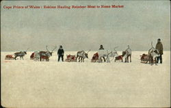 Eskimo Hauling Reindeer Meat To Nome Market