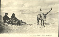 Traveling In The North With Rein Deer