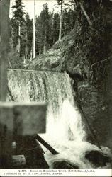 Scene On Ketchikan Creek