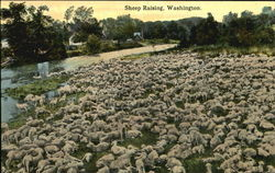 Sheep Raising