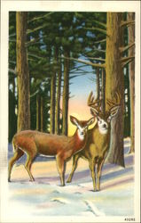 Deer in Snow Postcard