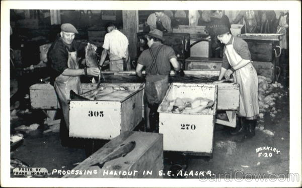 Processing Halibut In S. E. Alaska