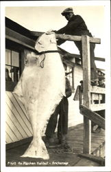 Giant Alaskan Halibut