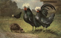Chickens and Porcupine