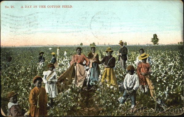 A Day In The Cotton Field Black Americana