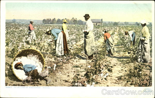 In The Land Of King Cotton Picking Black Americana