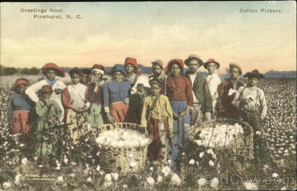Greetings From Cotton Pickers Pinehurst Black Americana