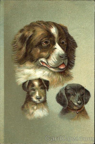 Portrait of Dogs