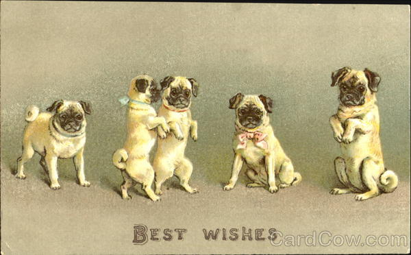 Best Wishes Dogs