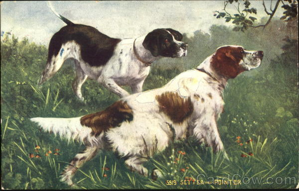 Setter And Pointer Dogs