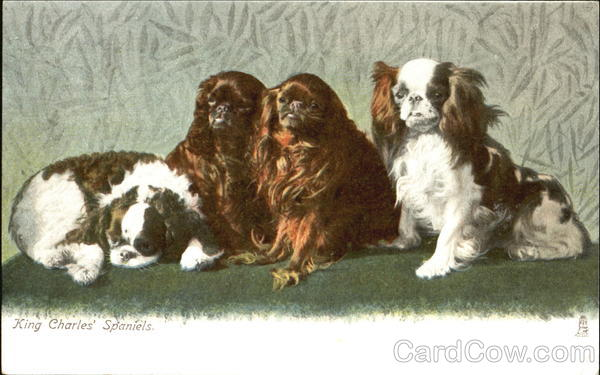 King Charles' Spaniels Dogs
