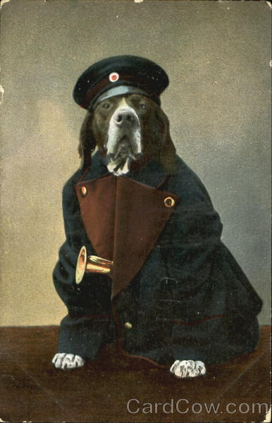 Dog in Band Uniform Dogs