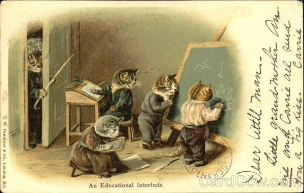 An Educational Interlude Cats