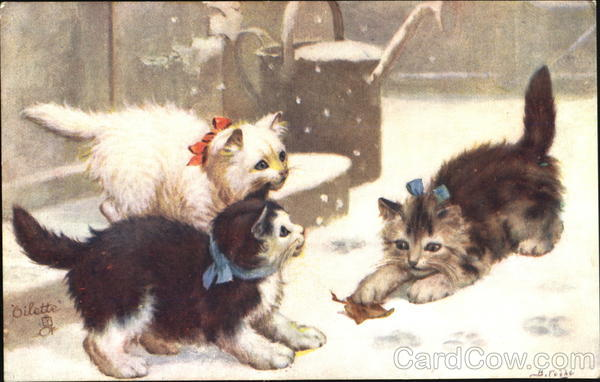 Kittens Playing in Snow Cats