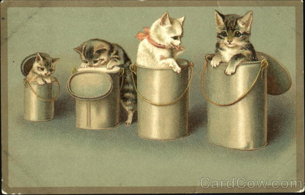Kittens in Pails Cats