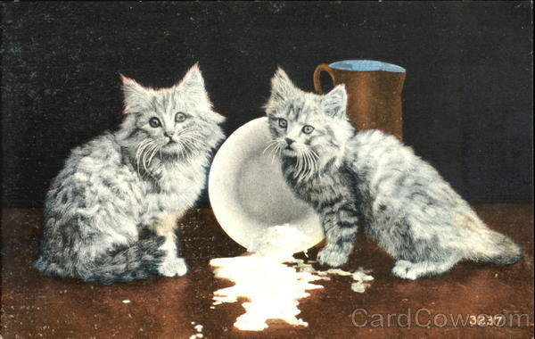 Cats with Spilt Milk