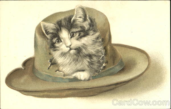 Cat in Worn Hat Cats