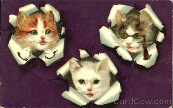 Kittens with Heads through wrapping paper Cats