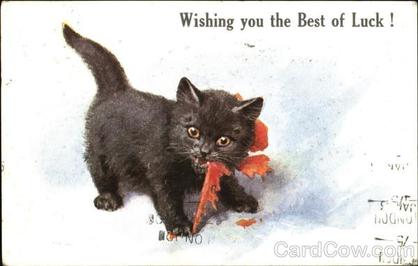 What Is My Paypal Email >> Wishing You The Best Of Luck! Cats