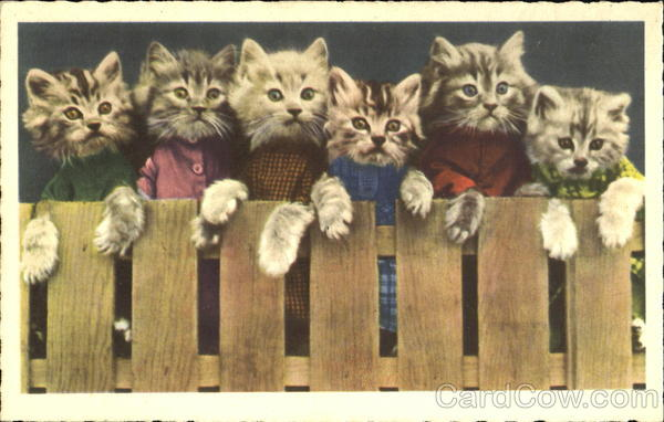 Kittens on a Fence Brooklyn New York