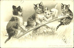 Teeter Tottering Cats