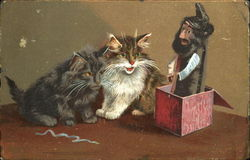 Cats and the magic Box Postcard